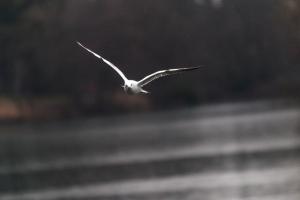 oiseaux-parc-tete-dor-31-janvier-2015-lightroom-17