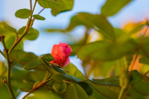 video-le-jour-ou-je-vis-ta-rose-lightroom-2-11