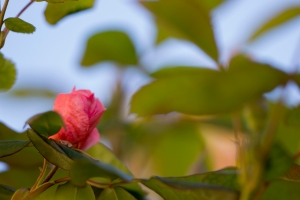 video-le-jour-ou-je-vis-ta-rose-lightroom-2-16