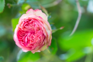 video-le-jour-ou-je-vis-ta-rose-lightroom-2-18