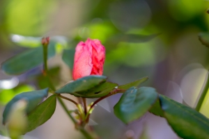 video-le-jour-ou-je-vis-ta-rose-lightroom-2-9